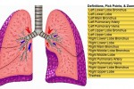 3d Lung view links