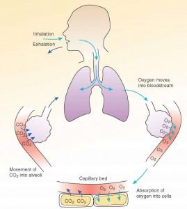 oxygs