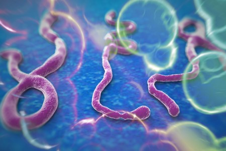 How the microscopic Ebola virus kills thousands